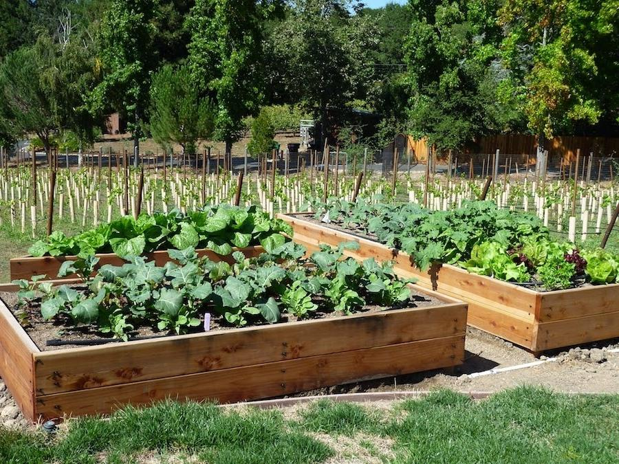 Raised vegetable garden beds photos