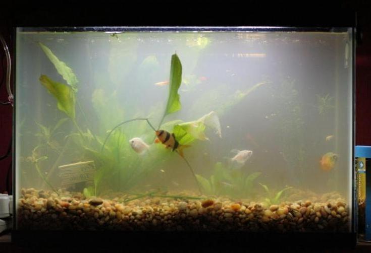 Как сделать в аквариуме воду прозрачной