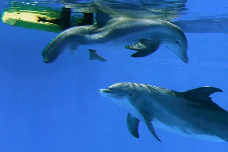 Clearwater Marine Aquarium Photos