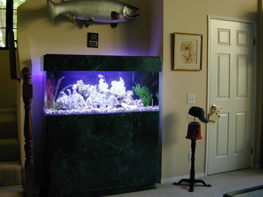 Marine fish tank maintenance 60 gallon 2017 fish tank for 60 gallon fish tank