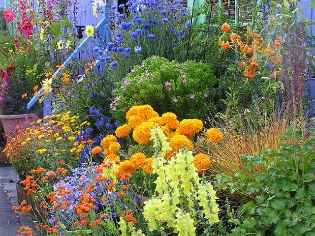 Annual flower garden photos for Annual garden designs